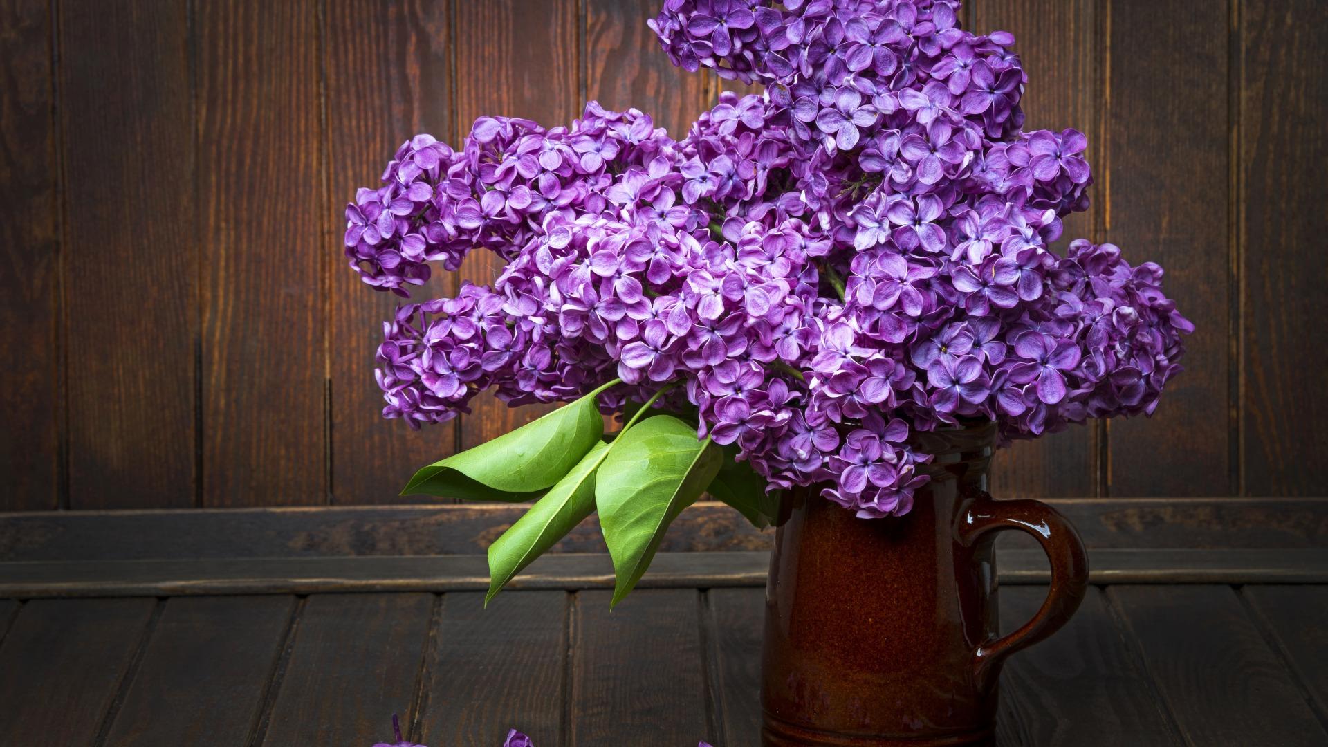 Сирень цветок что означает